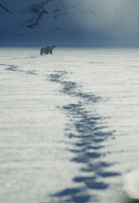 Alastair-Fothergill-Our-Planet-Sophie-Lanfear-polar-bear