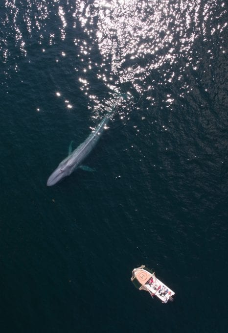 Alastair-Fothergill-Our-Planet-whale-drone