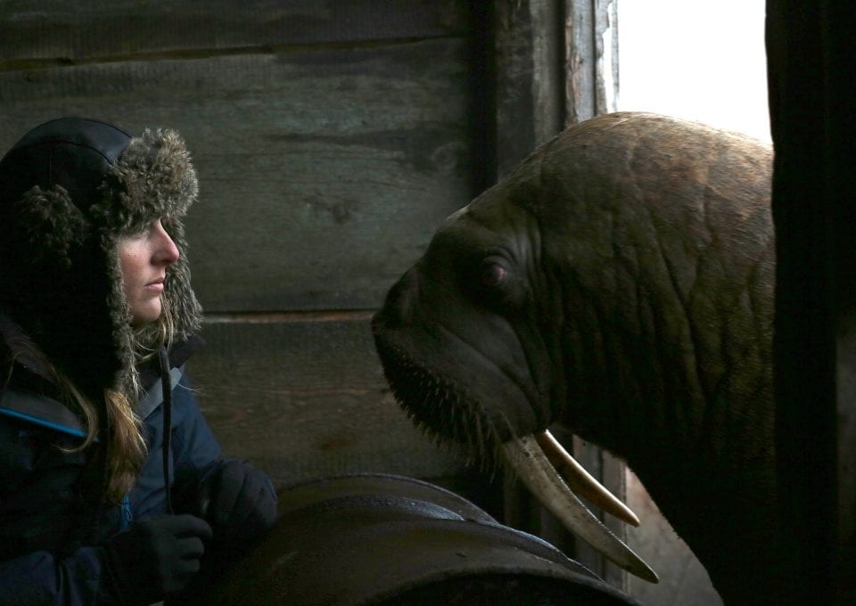 Alastair-Fothergill-Our-Planet-Jamie-McPherson-walrus