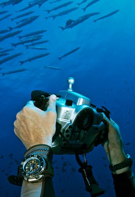 Mr Marc Hayek taking a photograph of barracuda