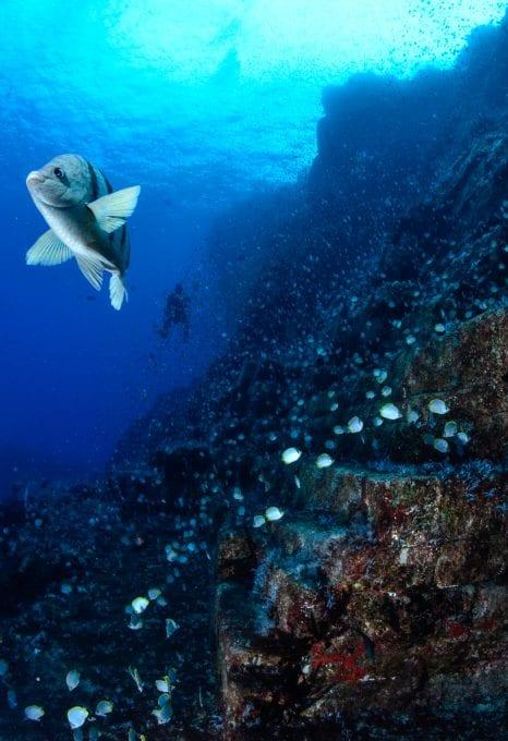 saint helena diving