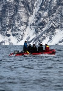 whale watching Norway Tromsø Zodiac