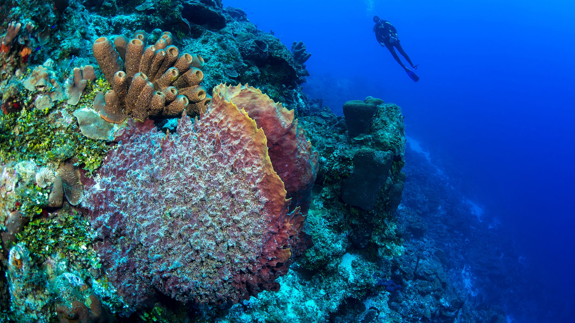 coral bleaching resilience turks and caicos