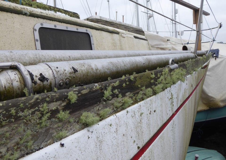elixir boat ocean sailing