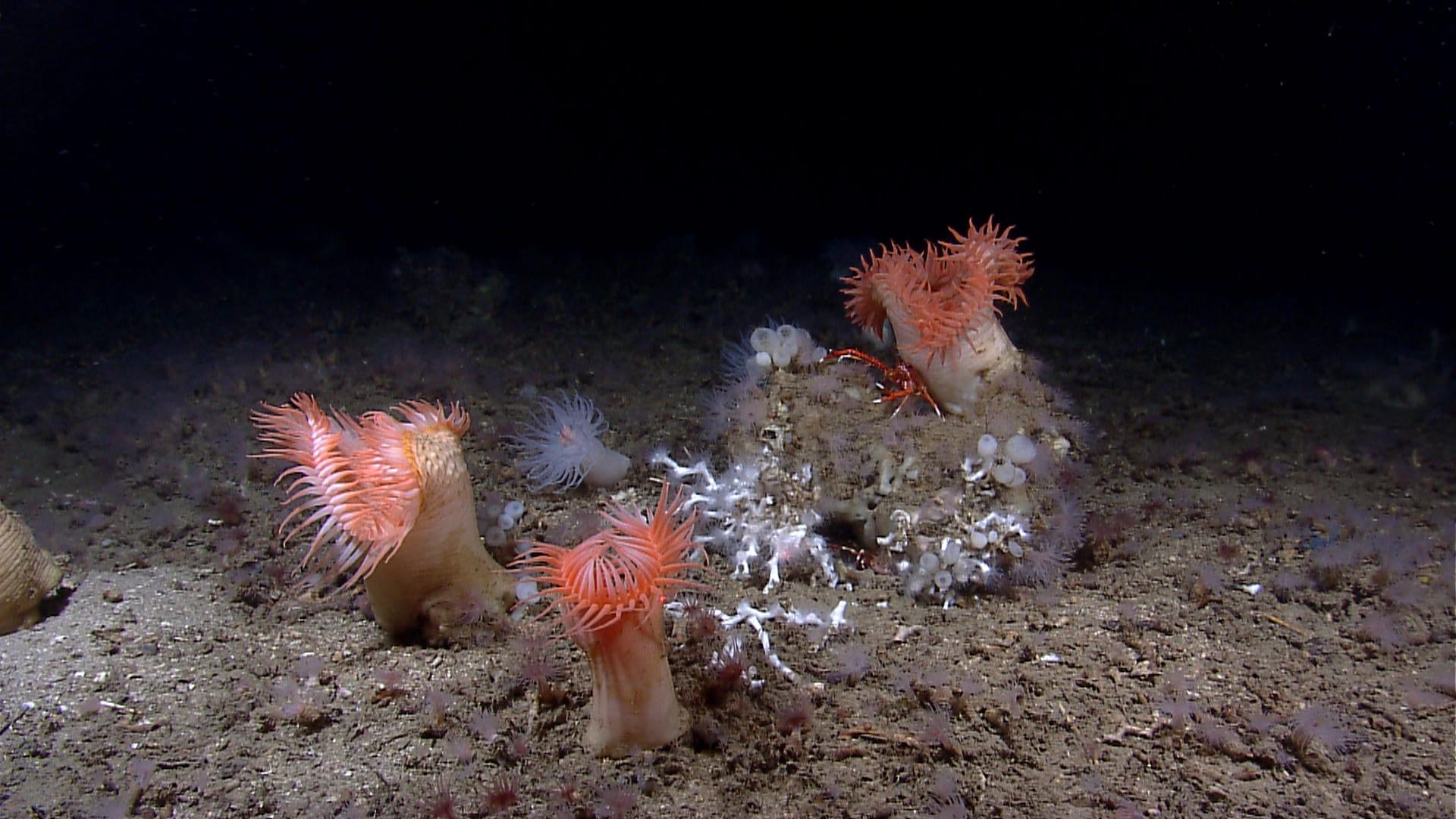 deep sea mining NOAA