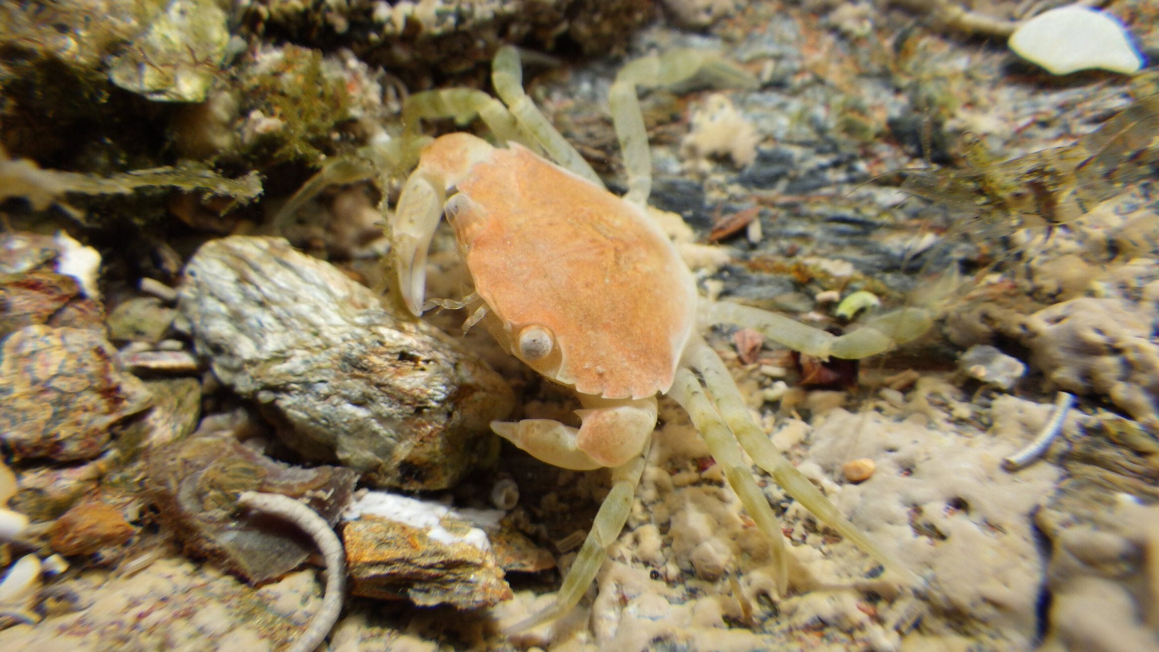 shore crabs ocean noise pollution