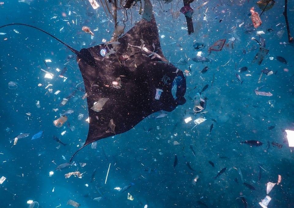 manta ray Bali plastic pollution ocean
