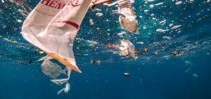 manta rays in ocean plastics