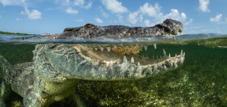 Simon Lorenz underwater photography Mexico