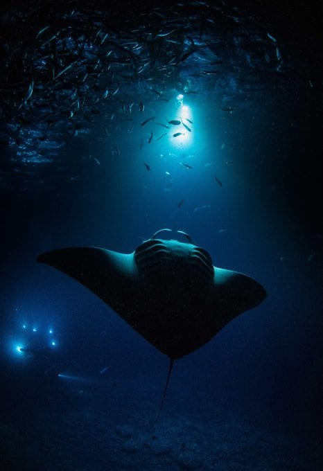 Simon Lorenz underwater photography manta ray
