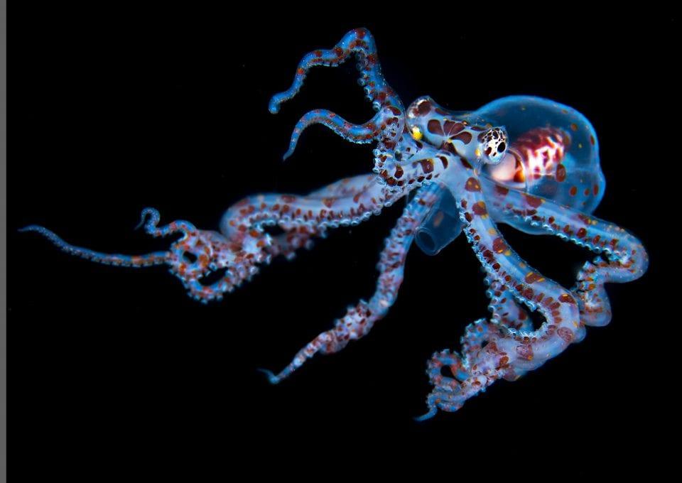 Simon Lorenz underwater photography blackwater