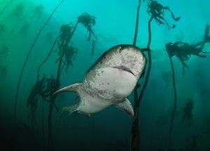 Simon Lorenz underwater photography shark