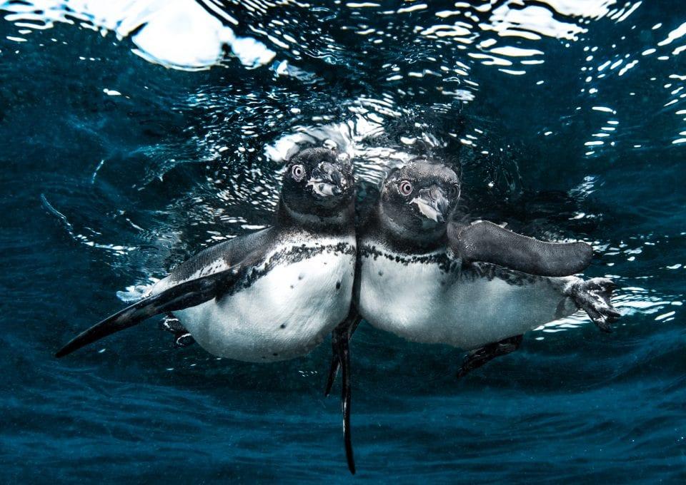 underwater photography Simon Lorenz Galapagos