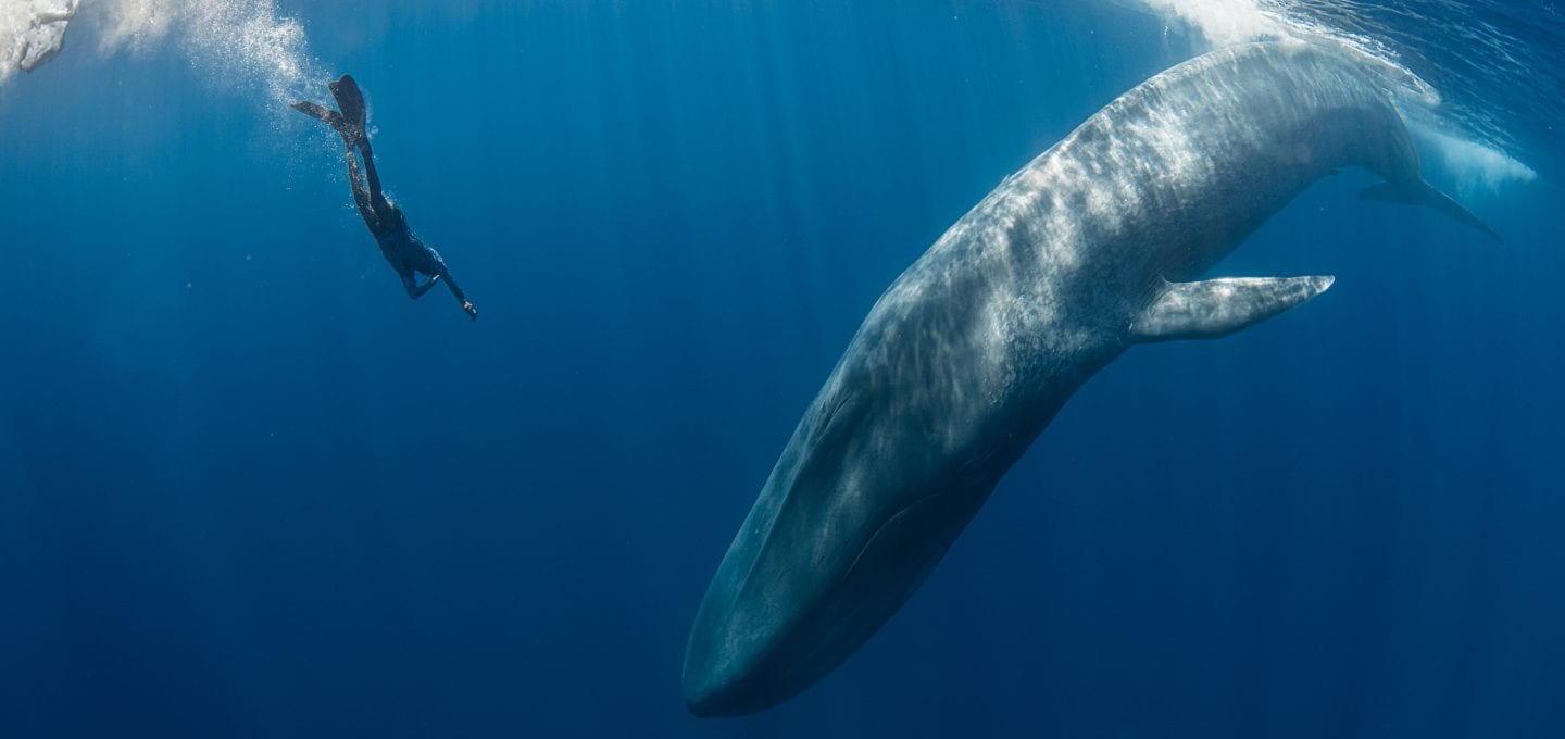 Underwater photography Simon Lorenz blue whale
