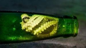 underwater photography simon lorenz