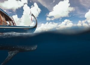Maldives Whale Shark Research Programme