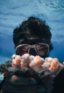 Coral Gardeners corals
