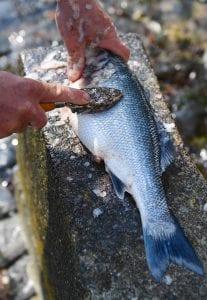 Jersey fishermen fish