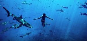 Titouan Bernicot Coral Gardeners sharks