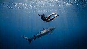 Titouan Bernicot Coral Gardeners shark