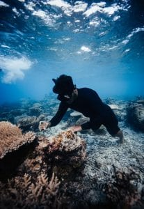 Titouan Bernicot Coral Gardeners outplanting