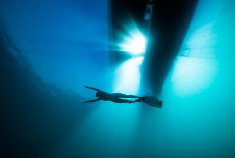 Project Hiu Shark Girl Madison freediver