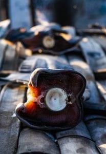 Project Hiu Shark Girl Madison shark-finning