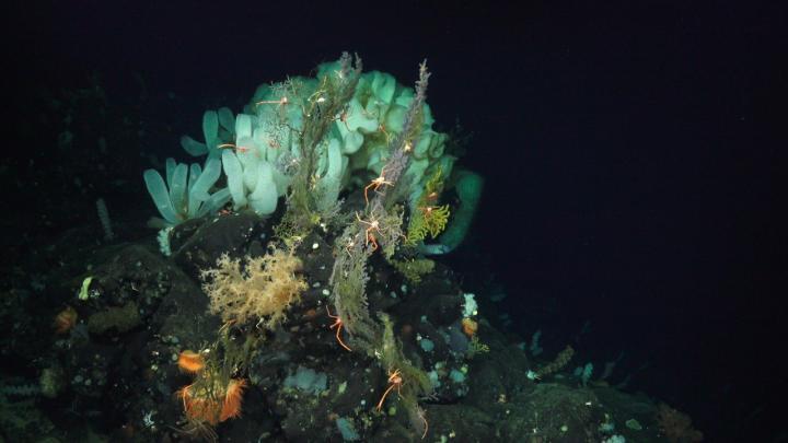 climate velocity deep ocean
