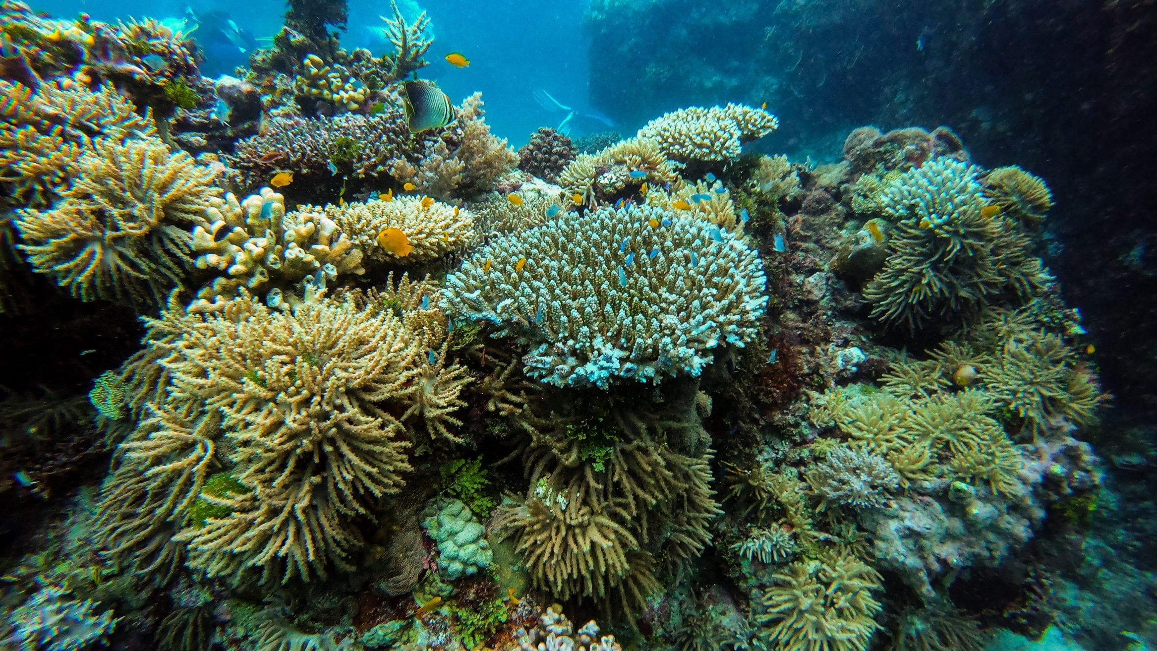 cyclones coral reef AIMS