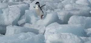 Greenpeace Pole to Pole Penguins Antarctica chinstrap ice jump