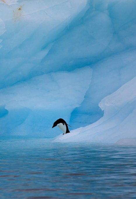 Greenpeace Pole to Pole Penguins Antarctica Adélie penguin