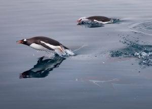 Greenpeace Pole to Pole Penguins Antarctica swimming