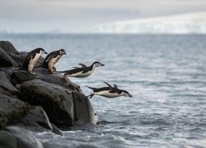 Greenpeace Pole to Pole Penguins Antarctica chinstrap penguins