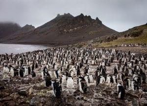 Greenpeace Pole to Pole Penguins Antarctica chinstraps