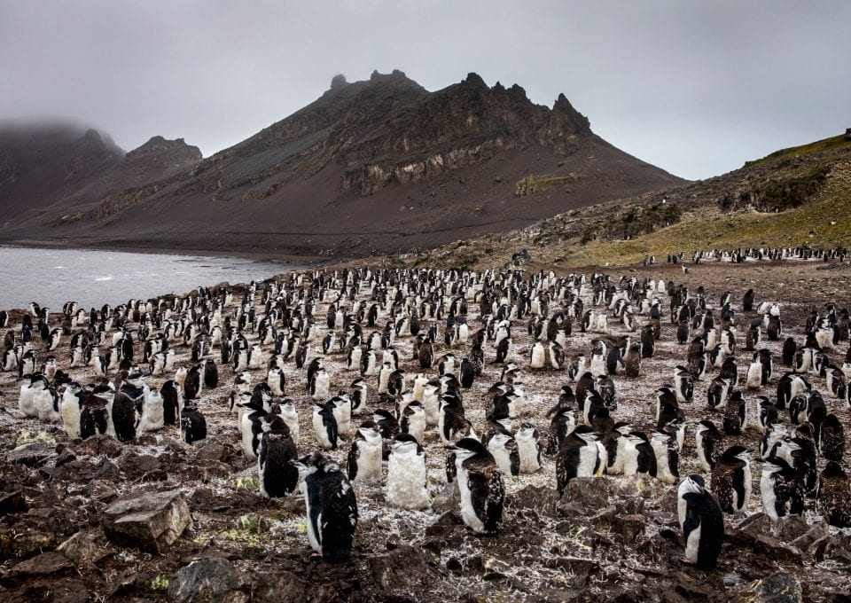 Greenpeace Pole to Pole Penguins Antarctica chinstraps