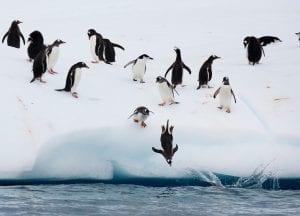 Greenpeace Pole to Pole Penguins Antarctica penguin dive