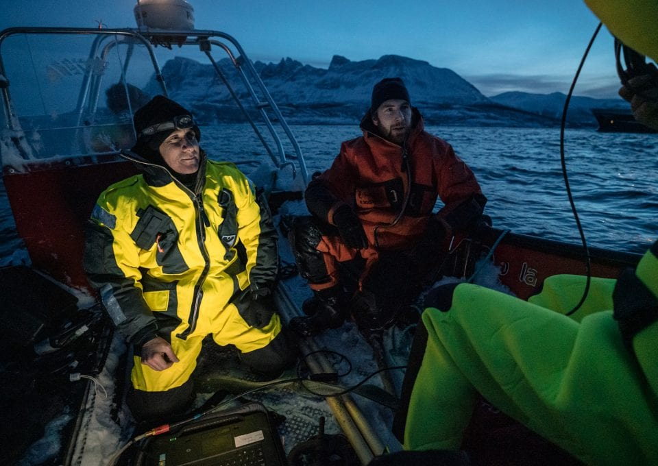 polar night arctic light pollution marine organisms research