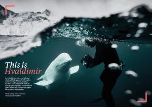 Hvaldimir, beluga whale, Issue 13, Oceanographic