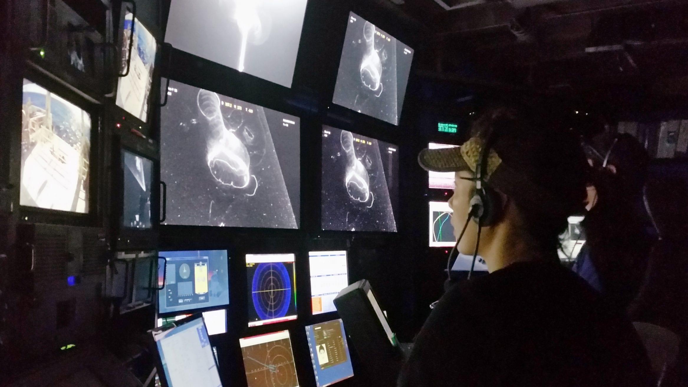 3D reconstructions deep-sea larvaceans