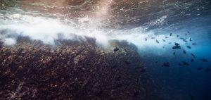 cocos island costa rica swimway