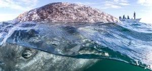 Franco Banfi Isotta photographer whale