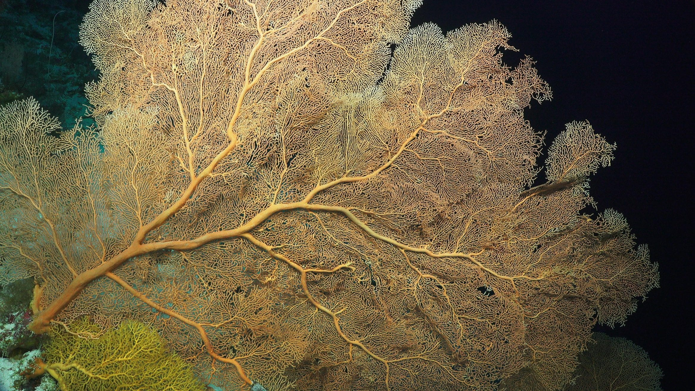 Coral Sea Marine Park Australia