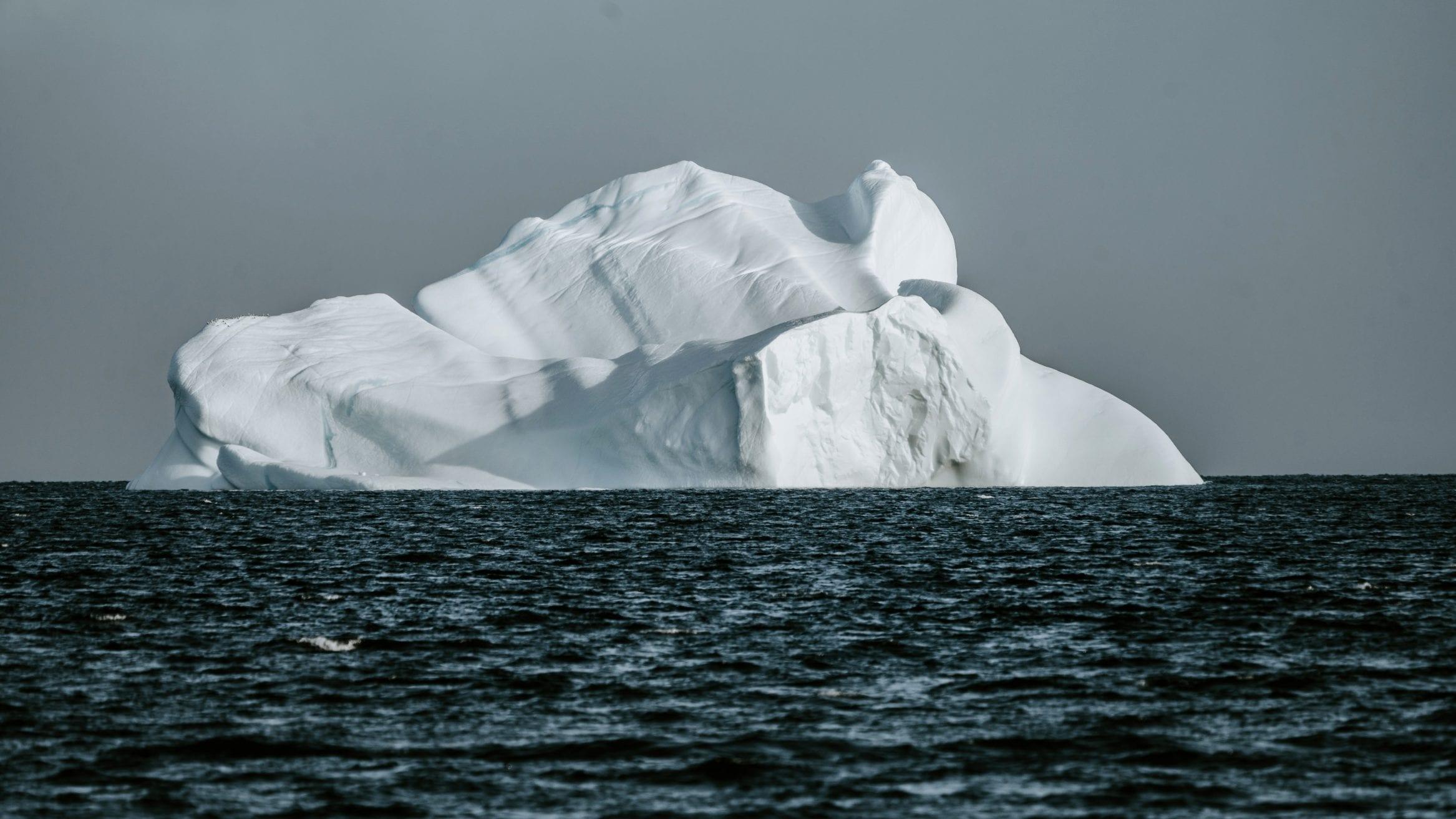 phytoplankton arctic ocean