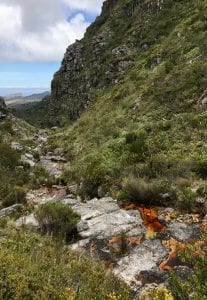 Table Mountain Threatened Amphibian Programme Dr Jeanne Tarrant Endangered Wildlife Trust