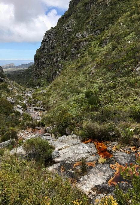 Table Mountain Threatened Amphibian Programme Dr Jeanne Tarrant Endangered Wildlife Trust