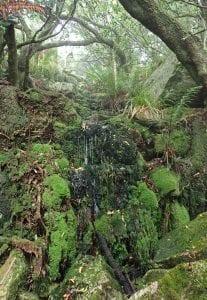 Table Mountain Habitat Threatened Amphibian Programme Dr Jeanne Tarrant Endangered Wildlife Trust