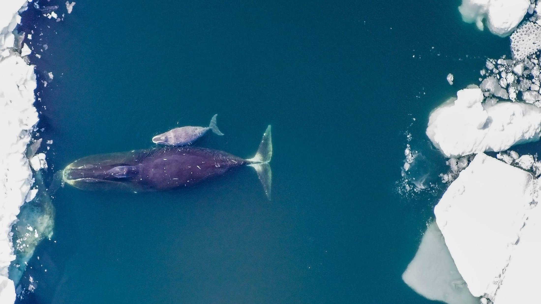 Bering Strait ocean noise Arctic sea ice