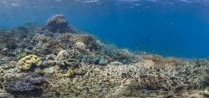 Great Barrier Reef Legacy Coral Biobank bleach