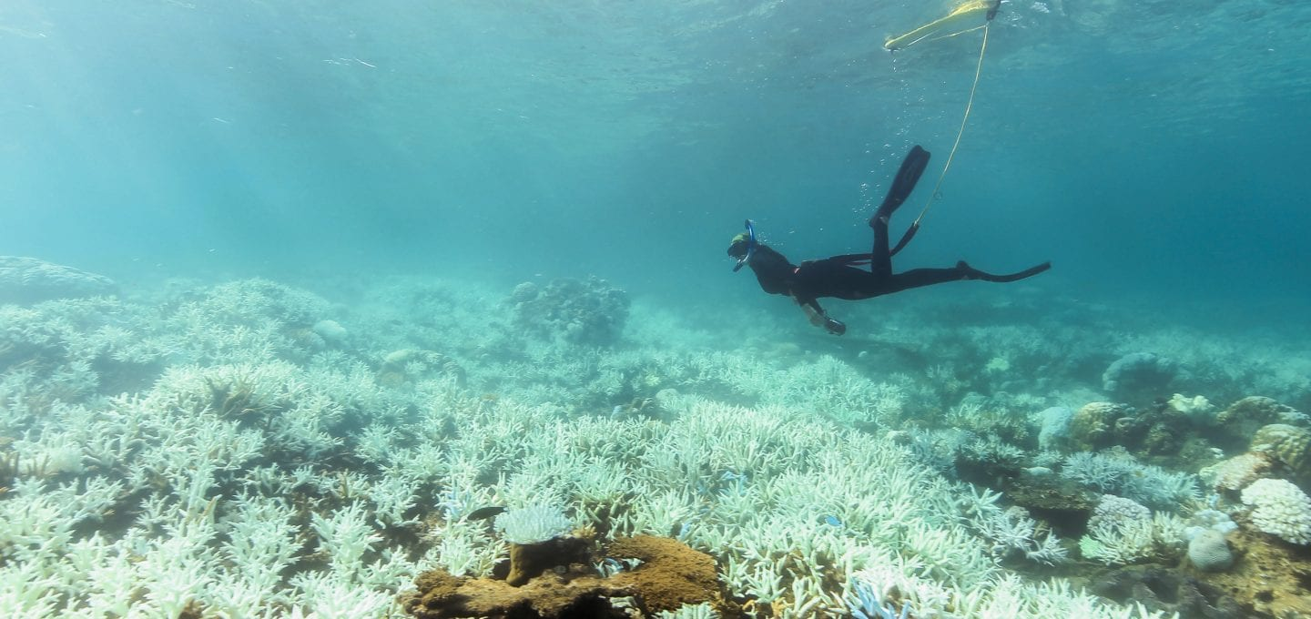 Great Barrier Reef Legacy Coral Biobank bleaching