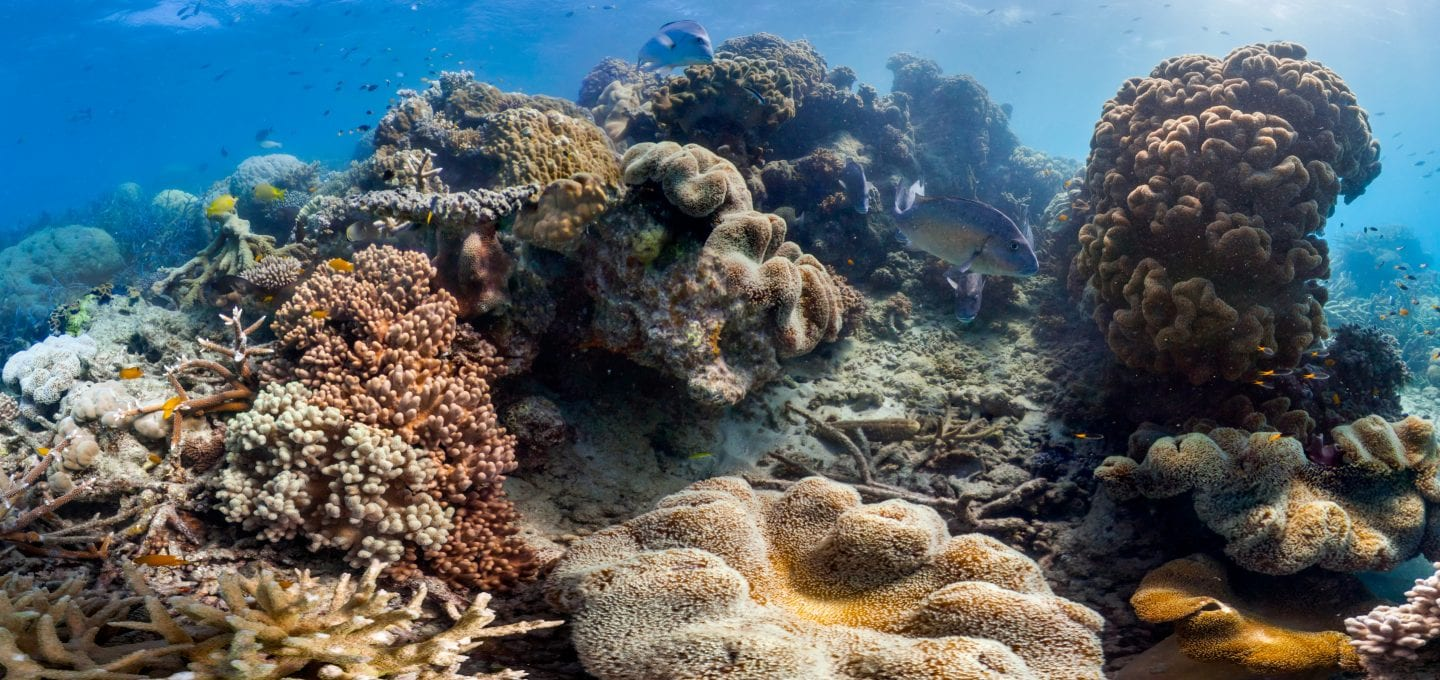 Great Barrier Reef Legacy Coral Biobank